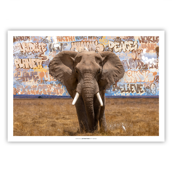PRINT EDTION ELEPHANT I