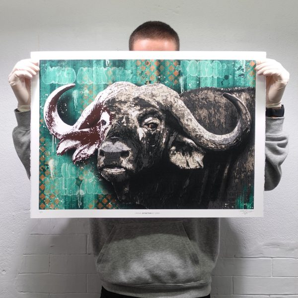 AFRICAN BUFFALO I BIG FIVE PRINT EDITION